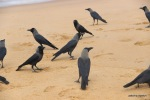 crows wait around for any thing that might fall out or get thrown out in case the fishermen don't want a particular kind of seafood .