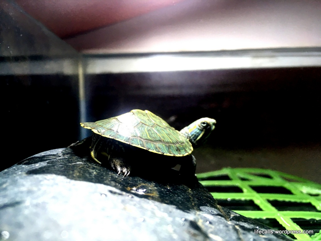 Turtle basking platform (DIY)