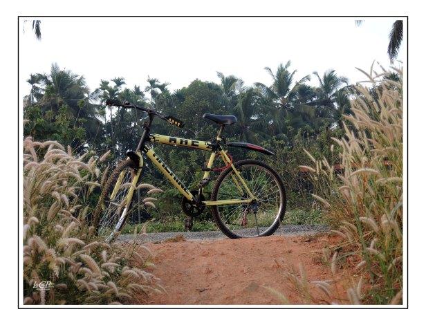 Morning Cycling 001